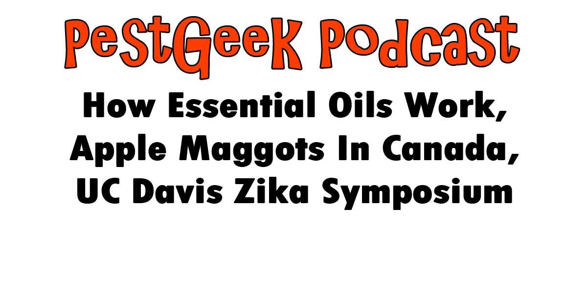 How Essential Oils Work, Apple Maggots In Canada, UC Davis Zika Symposium Josh Culver Thebugman Owner at The Bug Man Lumberton Texas Pest Management Inc. @PestMgmt Pest control in Texas Call or Comments 707-395-7378 Tech Tip Backpack sprayer extension wand Solo telescoping carbon fiber wand provides extra reach for spraying high shrubs, trees, eves, Telescopes from 4 feet to 8 feet. http://www.solonz.co.nz/Products/Accessories/Sprayer-Accessories SEO NAP Name Address Phone Is on your footer or in one of the widget areas Book of The Week Start with Why: How Great Leaders Inspire Everyone to Take Action by: Simon Sinek Pest Alerts The Canadian Food Inspection Agency (CFIA) has issued a revised directive, (D-00-07) Phytosanitary requirements to prevent the introduction and spread of apple maggot, Rhagoletis pomonella. http://www.inspection.gc.ca/plants/plant-pests-invasive-species/directives/horticulture/d-00-07/eng/1323819375916/1323819810662 News UC Davis Zika Virus Public Awareness Symposium Video 2:39:36 https://video.ucdavis.edu/media/Zika+Virus+Public+Awareness+Symposium/0_n3aupf5c How Essential Oils Work To Control Insects And Arachnids. Adulticidal Antifeeding Feeding Deterrent Action Ovicidal Oviposition Deterent Egg Hatching Inhibitor Repellent Progony Prodcution Injibitor Neurotoxin Larvicidal Order or Biology Coleoptera Beetles Neuroptera Lacewings Hymenoptera Ants Antifungal activity of eugenol http://www.scielo.br/pdf/tpp/v35n3/01.pdf Essential oils as a source of natural insecticide agent http://docsdrive.com/pdfs/academicjournals/ijbc/2011/266-290.pdf The potential of botanical essential oils for insect pest control http://esa.ipb.pt/pdf/saps6.pdf Deterrent effects of some Sri Lankan essential oils on oviposition and progeny production http://world-food.net/download/journals/2003-issue_2/j2-agriculture-95.pdf September of 2011 Ficus whiteflies Whiteflies on palms Lac Lobate Scale cocoplum Used the same protocols for synthetics Based on pest biology i.e.